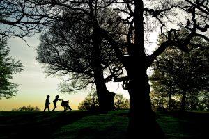 Richmond Park, London